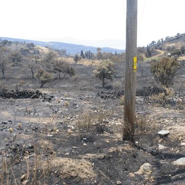Σημείο έναρξης δασικής πυρκαγιάς Ν.Στύρα - mpazigos.gr